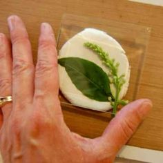 Making Molds from Nature