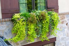 Window Box Contest Entry Winter into Spring