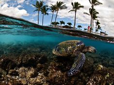 Above and below water shots with turtle!
