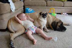 famili, hous, animal friends, kids, puppi, pillows, pug, big dogs, pillow pets