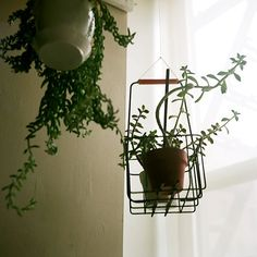 i have a container like this, i never thought to hang it