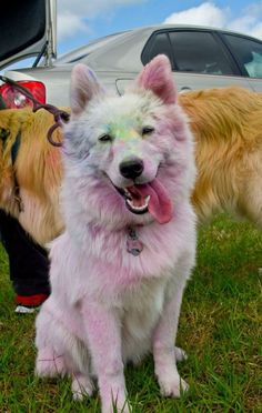 This Is What It Looks Like When A Dog Goes On A Color Run <3