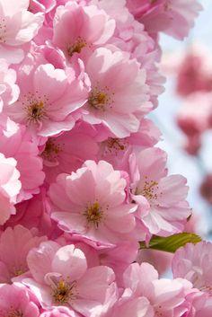 Blomsterverkstad Rosa lycka