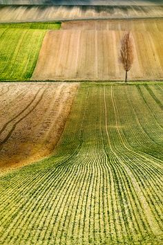 Fields  #landscape #photography #lines #nature #field