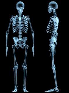 2ºC aprende: Los huesos y las articulaciones. Juegos online
