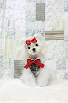 School Girl Maltese