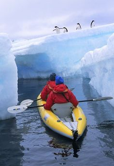 Kayaking with Penguins in Antarctica - can you really do this?! Would be a dream!