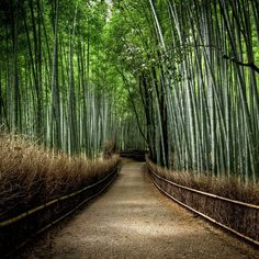Sagano Bamboo Grove - Japan