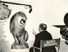 film, peopl, alfredhitchcock, alfr hitchcock, alfred hitchcock, movi, hitchcock direct, lions, mgm lion