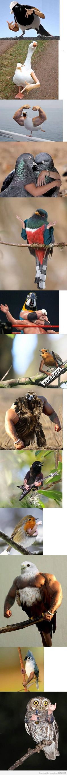 Birds + arms = Not bad
