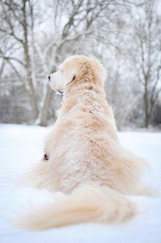 Golden Retriever Snow #SnowDogs Merry Christmas Card Puppy Holiday Dogs Santa Claus Dog Puppies Xmas #HolidayDogs