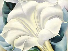 Georgia O'Keeffe art portfolio, georgia okeeff, artists, white flowers, white trumpet, colors, flower paintings, flower prints, art flowers