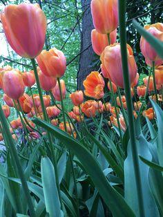 Garven Gardens