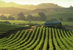 Touring Napa Valley, the Wine Country Gem