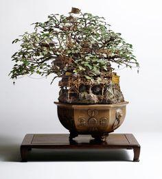 Takamori Aiba's bonsai tree art