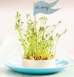Sprouting lentils via Chatelaine (found via Poppytalk)