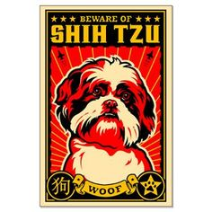 Beware of Shih Tzu