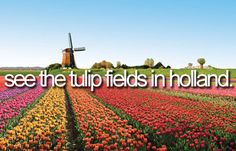 See the tulip fields