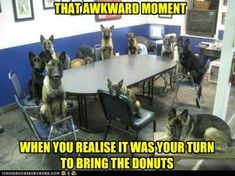 german shepherd humor | OTHER FUN AND FUNNY DOG HUMOR, maybe not GSD but worth the smile!