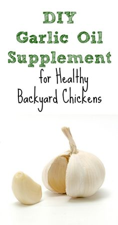 DIY Garlic Oil Supplement for Healthy Backyard Chickens :: Five Little Homesteaders