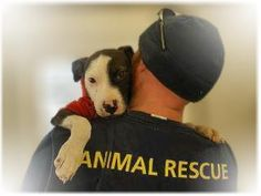 Animal Rescue - they are miracle workers