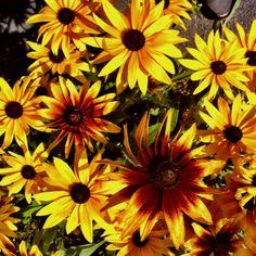 Flowers @ Leland lab, Cornell U.