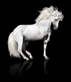 Stunning Baroque Horse Image.  Andalusian.  #cantercouture