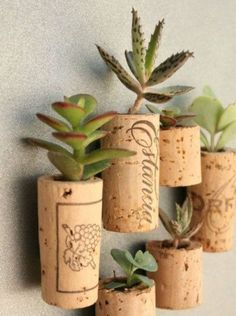 Use corks as a plant holder!
