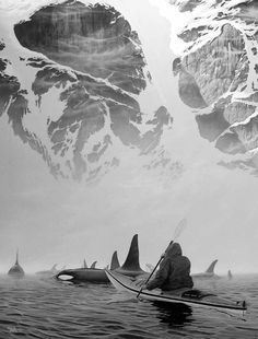 Kayaking with orcas.