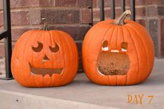 Day 7 of Pumpkin Preservation Test - How to make your pumpkins last longer!