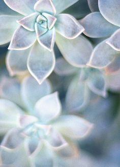 . plant, pastel, mint green natural flowers, color palettes, blue flowers, blue green, blue succulents, blue weddings, wedding colours