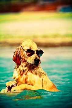 This dog is too cool for the sea.
