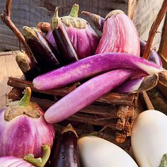 Add eggplant as a colorful addition to your garden! More grow colorful vegetables: http://www.bhg.com/gardening/vegetable/vegetables/grow-colorful-vegetables/?socsrc=bhgpin081913eggplant=9