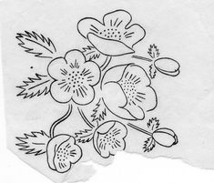 Risco. Bordado. Flores. Embroidery patterns