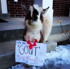 "If you have a goat, or have access to a goat, here's a prom ask idea for you!  Leave a goat on the front porch with a note around its neck.....""Will you 'goat'o prom with me?""  What a unique and creative promposal!"