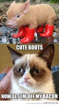 #cute #boots now get them off my #bacon #letsgetwordy #grumpycat