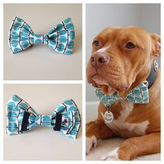 Blue Dots Bow Tie. This is exactly what cash will look like when he's old :) I gotta decorate him!