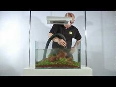 The Making of 'Five Stones' Aquascape and Guide to Iwagumi Layout by James Findley (Youtube)