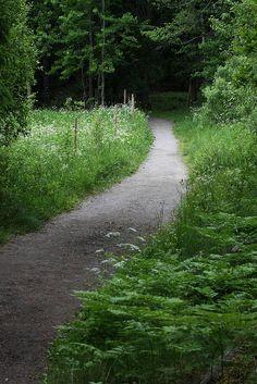 Road to dark forest Sweden