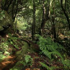 This is how Laurissilva Forest looks