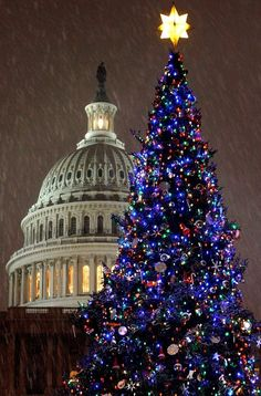 Christmas ??Traditions: the other Washington Christmas Tree is the Capitol Christmas Tree which has been an American tradition since 1964. Each year it is lit by the Speaker of the House , in 2012 the tree will be from the White River National Forest in Colorado. The first Capitol Tree was a live 24-foot Douglas fir tree planted on the west lawn. The tree died in 1968 after a severe wind storm and root damage, , the U.S Department of Agriculture Forest Service has provided the trees ever sinc...