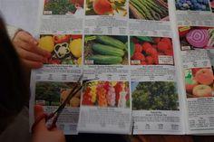 Starting a Garden Journal