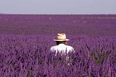 http://www.provenzafrancia.it/files/2010/10/valensole-coltivatore.jpg