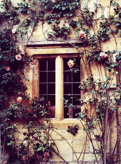 whir roses