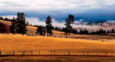 Stay on a working cattle ranch in western Montana