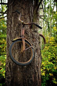 Comment from another Pinner: The story is pretty cool... a young man went off to war (WWII) and left his bike on that tree.... he was killed in the war and the folks left it there to remind them of him... the tree grew around it and now its about 20 ft in the air :D