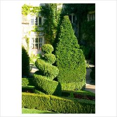 Clipped Yew hedging and topiary at The Abbey House, Malmesbury, Wiltshire