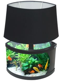 An aquarium lamp, I like the idea, but make it square. Fishes go apesh*t in sphere shaped aquariums