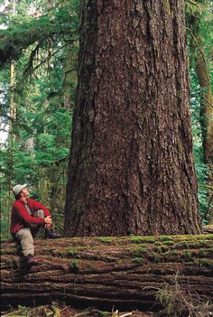 Cathedral Grove, Vancouver Island British Columbia, Canada