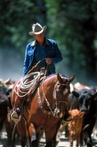 The Horse Whisperer with Robert Redford - Famous Movie & TV Horses